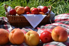 Fruits in a basket on the green grass. In the meadow Stock Photography