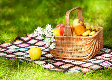 Fruits in the Basket. Royalty Free Stock Photography