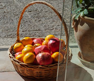 Fruits in the basket. Stock Images