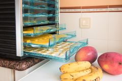 Drying fruits in the drying machine Royalty Free Stock Photo