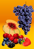 Fruits and berries. Vector illustration of grapes,peach,cherries and different berries royalty free illustration