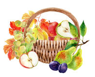 Fruits and berries in basket Royalty Free Stock Photography