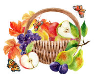 Fruits and berries in basket royalty free illustration