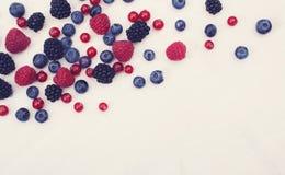 Fruits/berries hero header Stock Photography