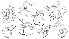 Fruits and berries set Stock Photos