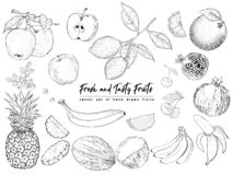 Fruits and berries. Set of isolated realistic objects of nature stock illustration
