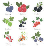 Fruits and berries Royalty Free Stock Photos
