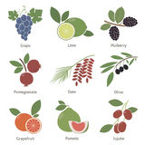 Fruits and berries Stock Photo