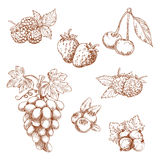 Fruits and berries sketch set. Fruits and berries engraving sketch icons with sweet fragrant strawberry and raspberry, cherry and grape grape, blueberry and Royalty Free Stock Images