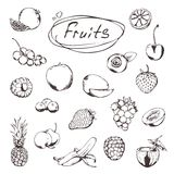 Fruits and berries, sketches. Of icons vector set vector illustration