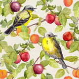 Fruits, birds - garden with plum, cherry, apples. Seamless pattern. Watercolor Royalty Free Stock Photo