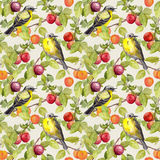 Fruits, birds - garden with plum, cherry, apples. Seamless pattern. Watercolor royalty free illustration