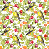 Fruits and birds - plum, cherry, apples. Seamless pattern. Watercolor stock illustration