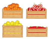 Fruits in box Royalty Free Stock Images