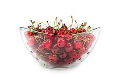 Fruits of cherries Royalty Free Stock Image