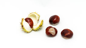 The fruits of the chestnut. In the shell and cleared on a white background Royalty Free Stock Photo