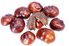 Fruits of chestnuts in dry shell isolated on white background Stock Images