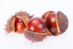 Fruits of chestnuts in dry shell isolated on white background. Some fruits of chestnuts in dry shell isolated on white background Stock Photo