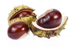 Fruits of chestnuts in green shell isolated on white background Stock Images