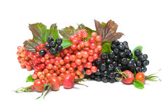 Fruits chokeberry, viburnum berries and wild rose close up on wh Royalty Free Stock Photo