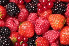 Fruits. Close-up of berry fruit - strawberry, raspberry, black berry and, red currant stock image