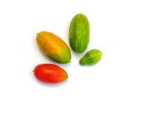 Fruits of Coccinia grandis (Cucurbitaceae) Stock Images