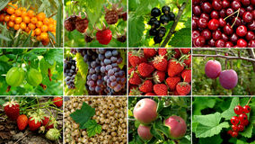 Fruits collection. Some organic fruits and berries collection stock photo