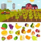 Fruits color flat icons set. Fruit farm illustration for web and mobile design. Fruits color flat icons set. Fruit farm illustration Stock Photo