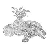 Fruits coloring book for adults vector Royalty Free Stock Photography