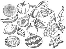 Fruits coloring book vector for adults Royalty Free Stock Photography