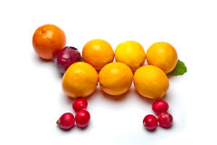 Fruits combined as animal. Mixed fruits combined as animal Stock Photo