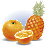 Fruits composition. Stock Image