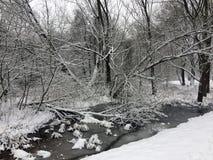 Fruits d'érable de forêt d'hiver sous la neige Photo stock