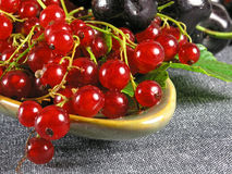 Fruits d'été : Groseille rouge images libres de droits