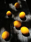 Fruits d'abricot Photo stock