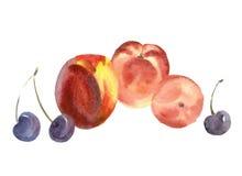 Fruits d'aquarelle Photos libres de droits