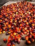 Fruits d'huile de palme Photos stock