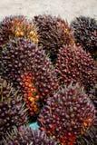 Fruits d'huile de palme Image libre de droits