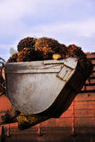 Fruits d'huile de palmier photo libre de droits