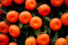 Fruits d'oranges aux arbres de mandarine Images libres de droits