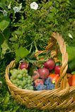 Fruits dans un panier Photo stock