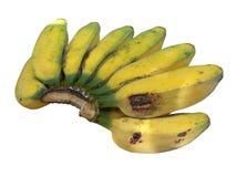Fruits de banane de Saba Image libre de droits