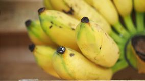 Fruits de bananes Image stock