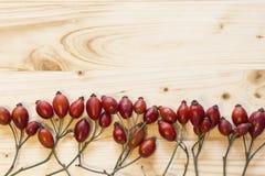 Fruits de Briar photographie stock libre de droits