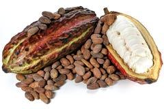 Fruits de cacao Photographie stock libre de droits