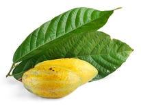 Fruits de cacao avec la lame Photo libre de droits