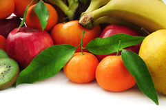 Fruits de collection Image stock