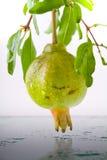 Fruits de grenade Images stock