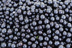Fruits de jabuticaba à la banque de ventes Photos stock