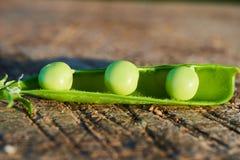 Fruits de jeunes pois dans des cosses Photographie stock libre de droits